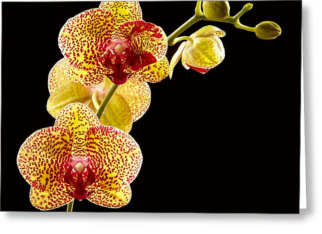 Jean Noren Greeting Cards - Yellow Orchid Greeting Card by Jean Noren