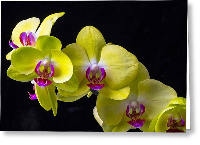 Pink Flower Branch Greeting Cards - Yellow Orchids Greeting Card by Garry Gay