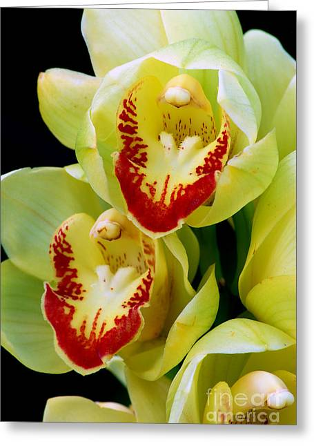 Close-up Pyrography Greeting Cards - Yellow Orchids Greeting Card by Nancy Mueller