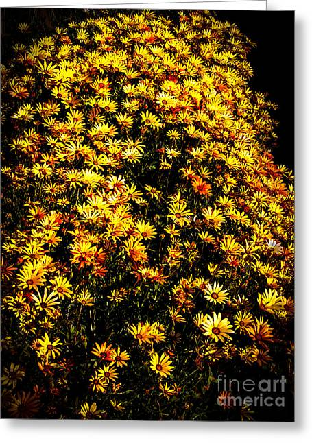 Picturesqueness Greeting Cards - Yellow Patch Greeting Card by Robert Bales