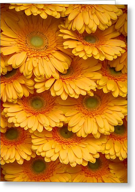 Square Format Greeting Cards - Yellow Peach Gerbera. Amsterdam Flower Market Greeting Card by Jenny Rainbow