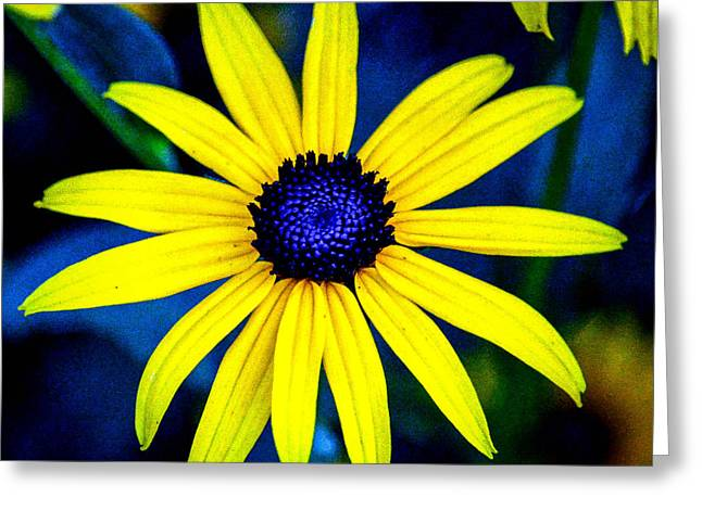 Black Top Greeting Cards - Yellow Petals and Blue Buttons Greeting Card by Black Brook Photography
