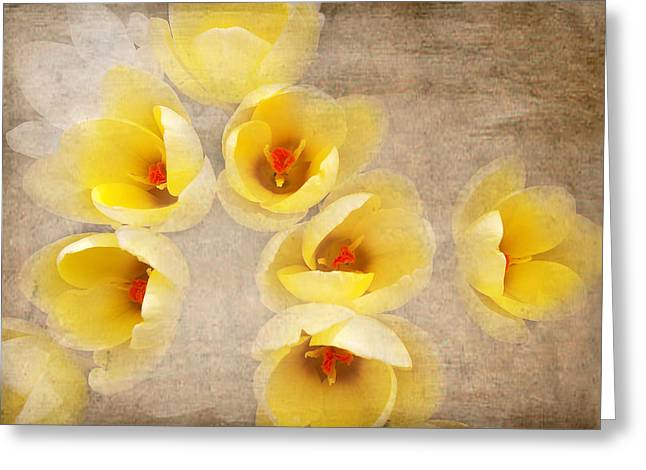 Yellow Petals Greeting Card by Kathi Mirto