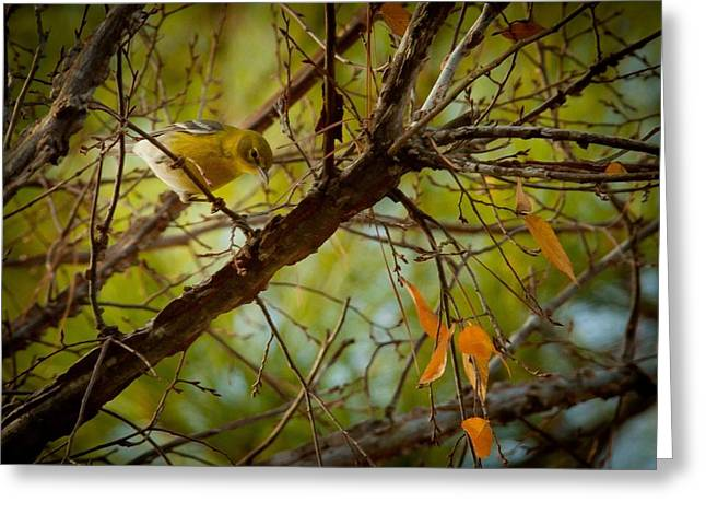 Bird In Tree Greeting Cards - Yellow Pink Warbler Greeting Card by Linda Unger