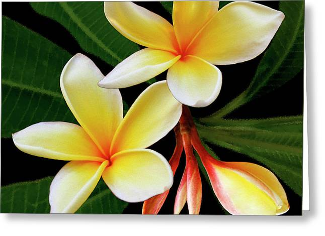 Floral Digital Art Greeting Cards - Yellow Plumeria Greeting Card by Ben and Raisa Gertsberg