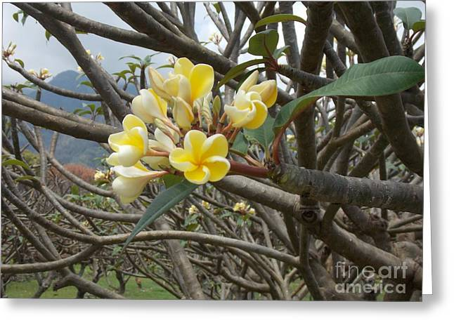 Best Sellers -  - Mindy Sue Werth Greeting Cards - Yellow Plumeria  Greeting Card by Mindy Sue Werth