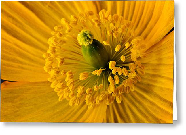 Abstract California Poppies Greeting Cards - Yellow Poppy 2 Greeting Card by Mary Jo Allen