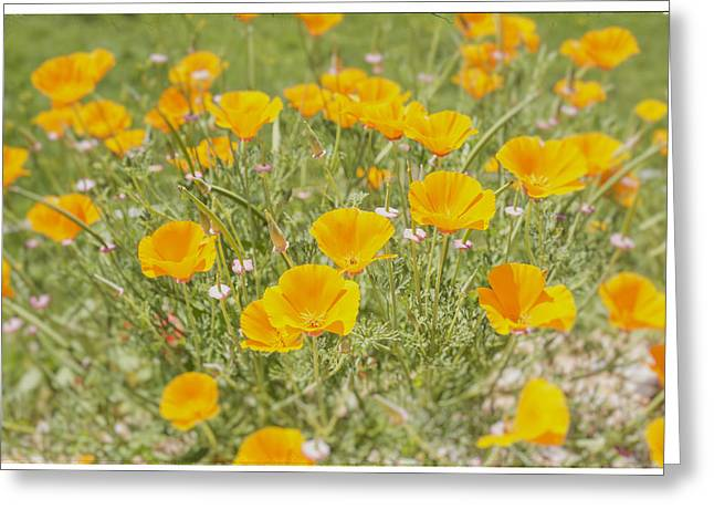 A Sunny Morning Greeting Cards - Yellow Poppy Field Greeting Card by Nomad Art And  Design