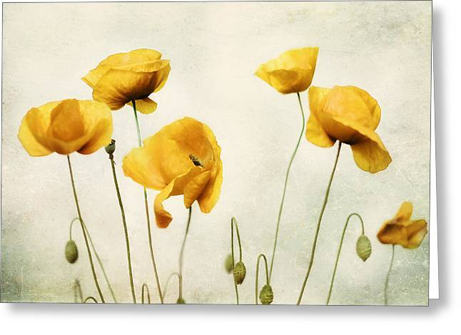 Yellow Poppy Photography - Yellow Poppies - Yellow Flowers - Olive Green Yellow Floral Wall Art Greeting Card by Amy Tyler