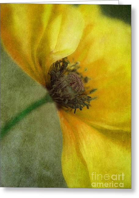 Gelb Greeting Cards - Yellow Poppy Greeting Card by Priska Wettstein