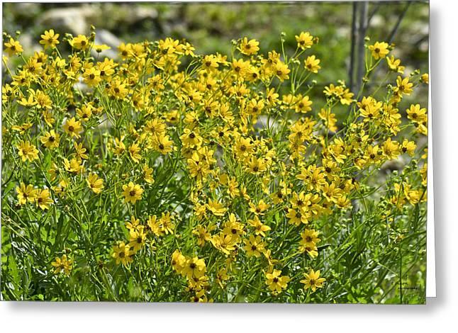 Yellow Rays Of Sunshine Greeting Card by Teresa Dixon