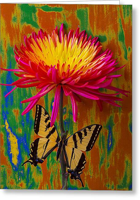 Antenna Greeting Cards - Yellow Red Mum With Yellow Black Butterfly Greeting Card by Garry Gay