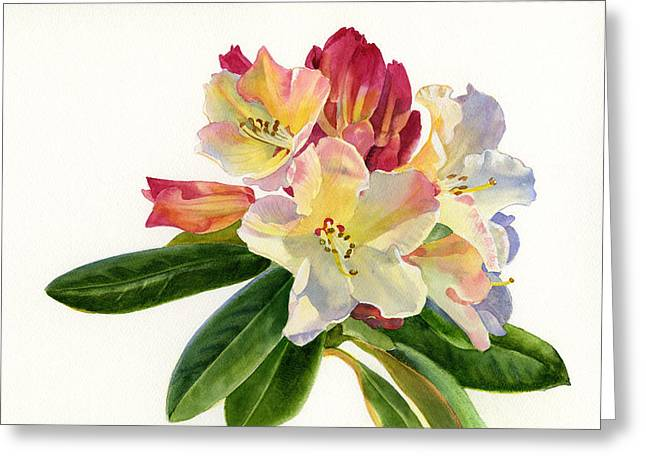 Rhododendrons Greeting Cards - Yellow Rhododendron with White Background Greeting Card by Sharon Freeman