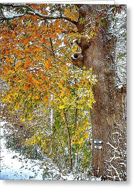 Nc Greeting Cards - Yellow Ribbon of Leaves Greeting Card by John Haldane