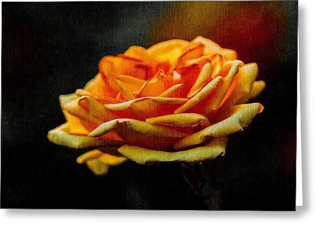 Photo Calendars Greeting Cards - Yellow Rose 1 Greeting Card by Alexander Senin