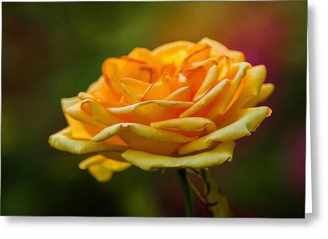 Photo Calendars Greeting Cards - Yellow Rose 2 Greeting Card by Alexander Senin
