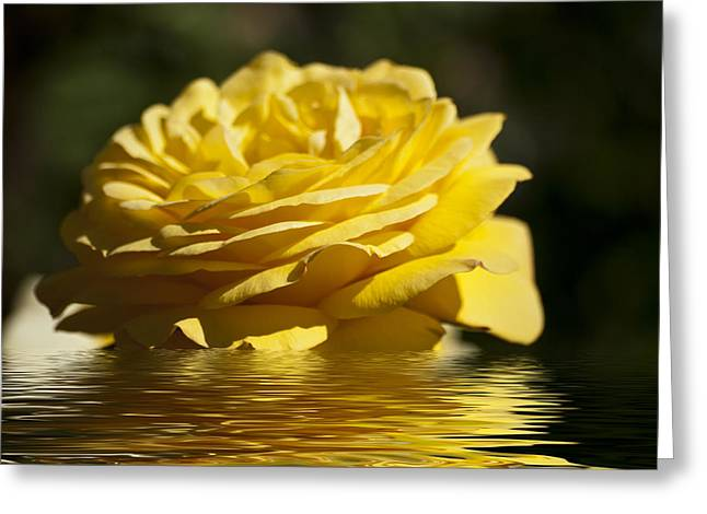 Yellow Rose Flood Greeting Card by Steve Purnell