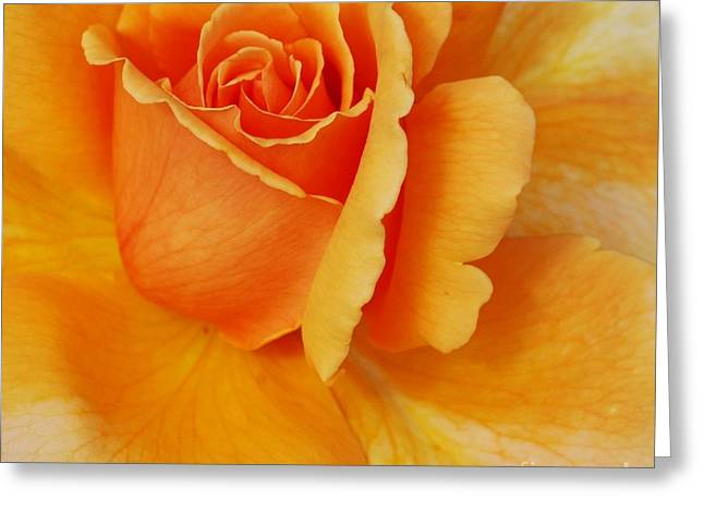 Beige Abstract Greeting Cards - Yellow Rose Greeting Card by Kathleen Struckle
