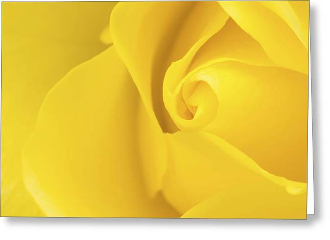 Close Up Floral Greeting Cards - Yellow Rose Macro Greeting Card by Wim Lanclus