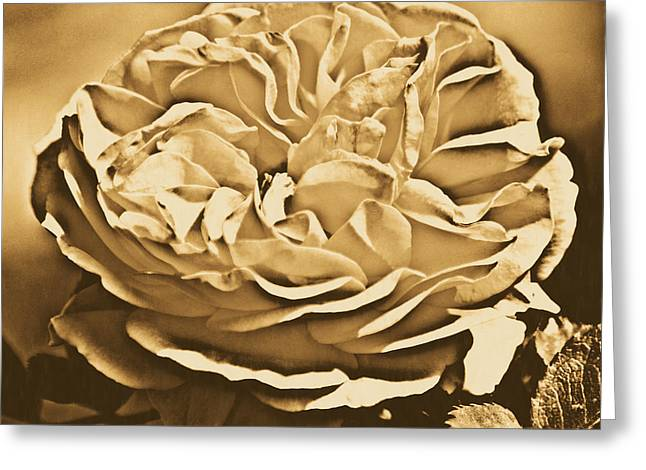 Yellow Rose Of Texas Floral Decor Square Format Rustic Digital Art Greeting Card by Shawn O'Brien