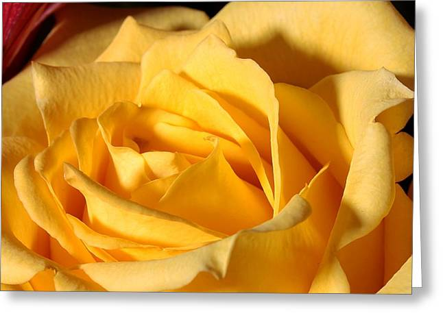 Bouquet Greeting Cards - Yellow Rose of Texas Greeting Card by Joe Kozlowski
