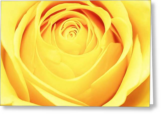 Paulette Thomas Greeting Cards - Yellow Rose Greeting Card by Paulette Thomas