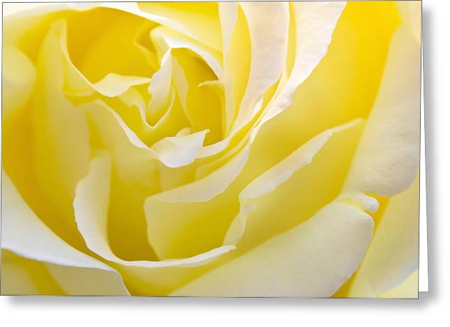 Macro Greeting Cards - Yellow Rose Greeting Card by Svetlana Sewell