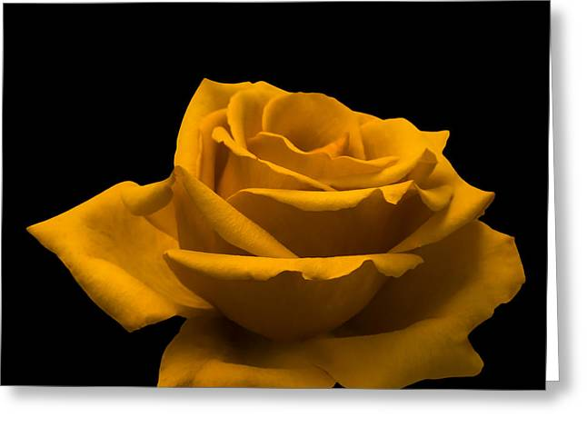 Yellow Roses Greeting Cards - Yellow Rose Greeting Card by Wim Lanclus