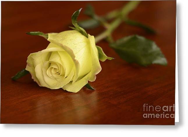 Rose Petals Pyrography Greeting Cards - Yellow rose Greeting Card by Yoshiko Wootten