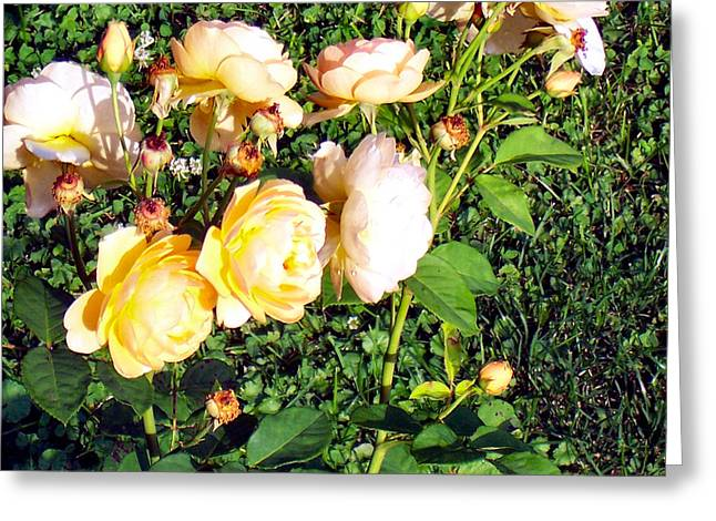 Sister Framed Prints Greeting Cards - Yellow Roses Greeting Card by Joy Reese