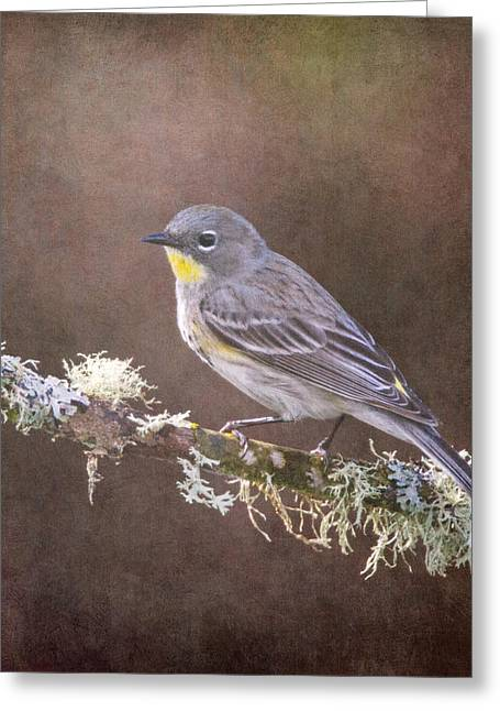 Wildlife Refuge. Greeting Cards - Yellow-rumped Warbler Greeting Card by Angie Vogel