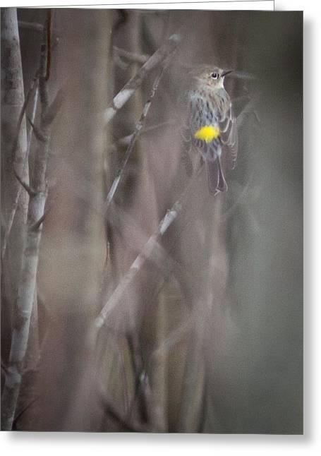 Rumpled Greeting Cards - Yellow-rumpled Warbler Greeting Card by Melinda Fawver