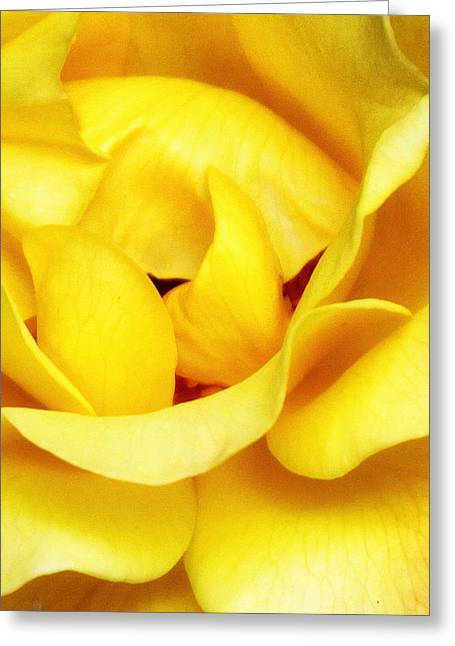 Yellow Sapphire Rose Palm Springs Greeting Card by William Dey