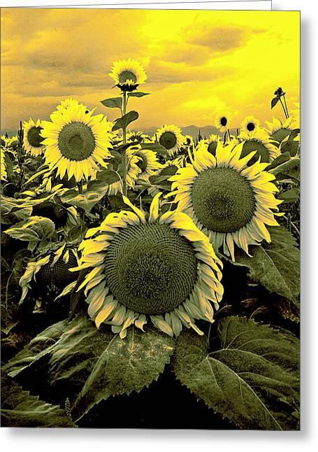 James Steele Greeting Cards - Yellow Sky Yellow Flowers. Greeting Card by James Steele