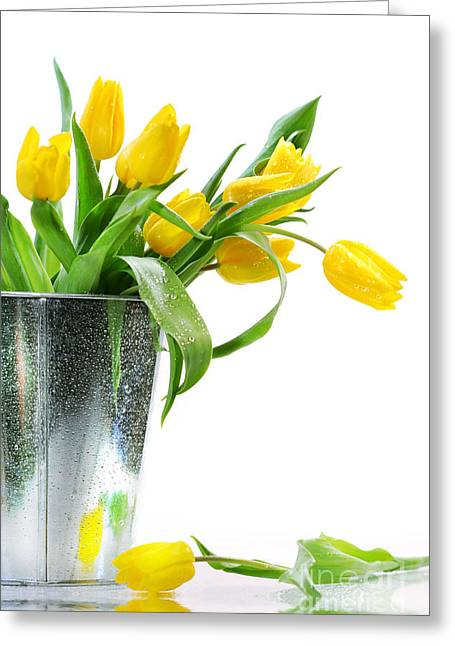 March Greeting Cards - Yellow spring tulips Greeting Card by Sandra Cunningham