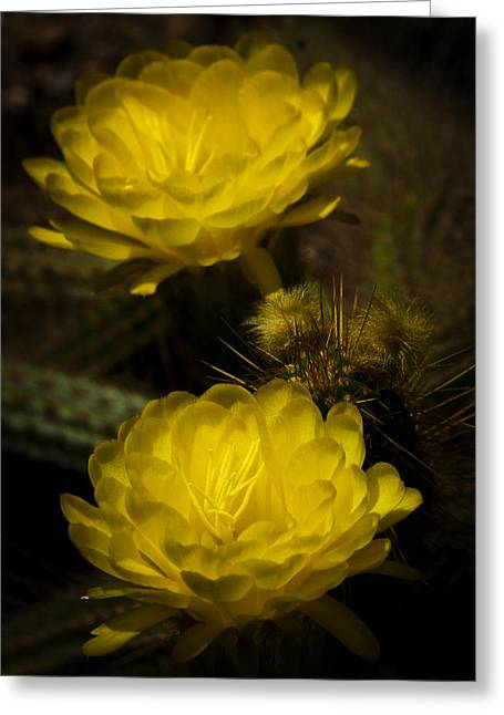 Torch Cactus Greeting Cards - Yellow Torch Cactus  Greeting Card by Saija  Lehtonen