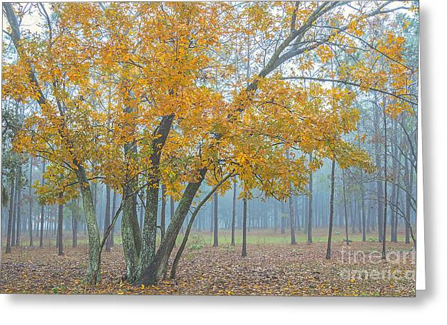 Auburndale Greeting Cards - Yellow Tree Greeting Card by Carlitos Cintron