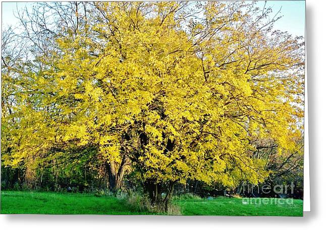 Fall Photos Digital Art Greeting Cards - Yellow Tree in the Fall Greeting Card by Marsha Heiken