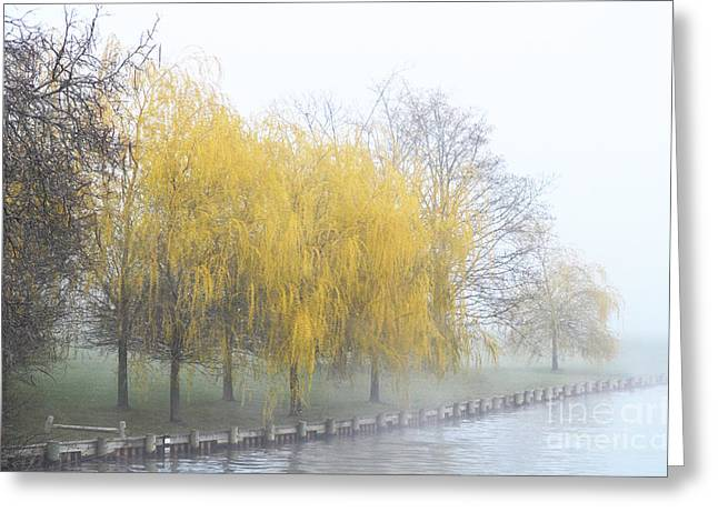 Waterscape Mixed Media Greeting Cards - Yellow Trees by the lake - Serene Landscape Greeting Card by AdSpice Studios