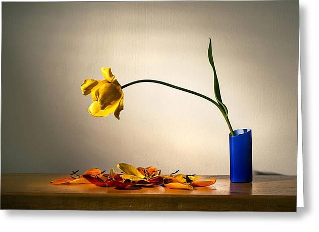 Yellow Tulip 2 Greeting Card by Ivan Vukelic