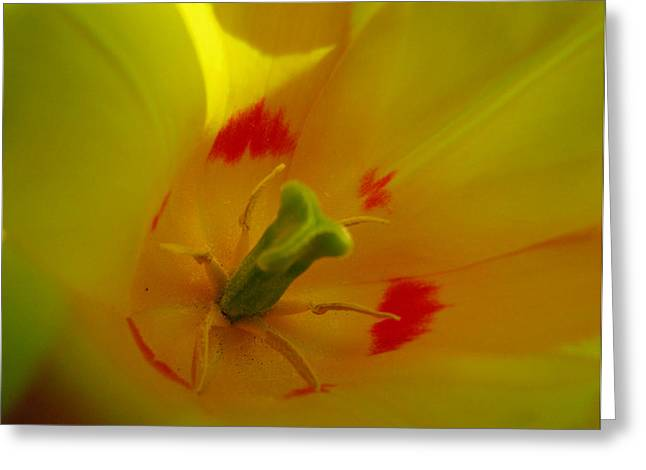 Blur Pyrography Greeting Cards - Yellow Tulip Greeting Card by Kelly McAleer