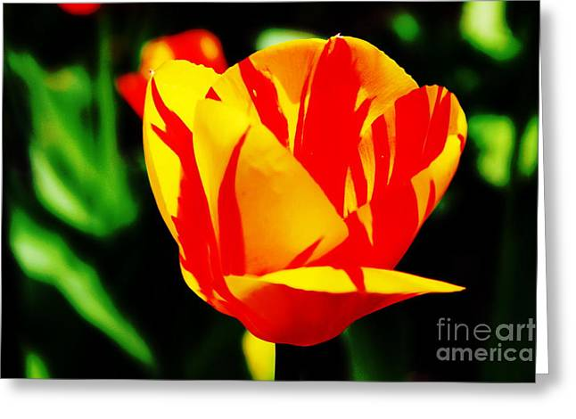 Photographs With Red. Greeting Cards - Yellow Tulip with Red 2 Greeting Card by Rod Ismay