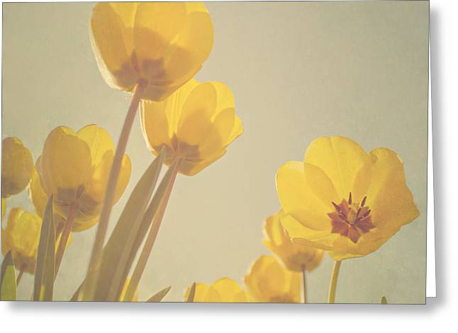 Yellow Flowers Greeting Cards - Yellow tulips Greeting Card by Diana Kraleva