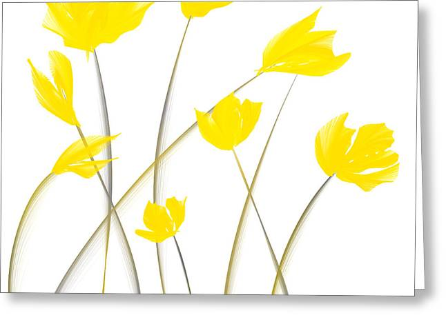 Yellow And Grey Abstract Art Greeting Cards - Yellow Tulips Modern Art Greeting Card by Lourry Legarde