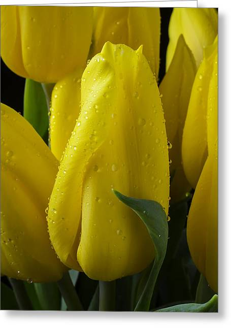 Rain Drop Greeting Cards - Yellow Tulips With Dew Greeting Card by Garry Gay