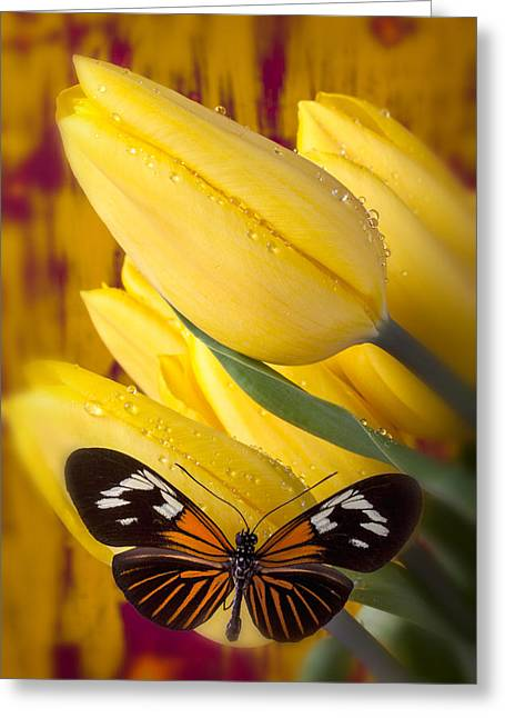 Antenna Greeting Cards - Yellow Tulips with Orange and Black Butterfly Greeting Card by Garry Gay