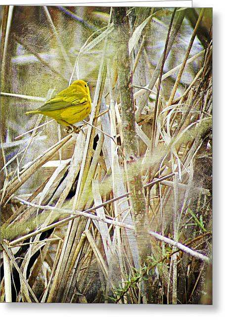 Ice And Warm Colors Greeting Cards - Yellow Warbler - Paint Greeting Card by Carol Toepke
