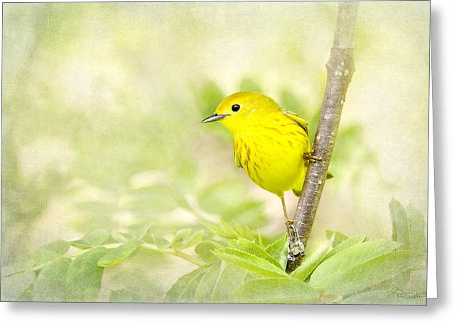 Yellow Warbler Greeting Cards - Yellow Warbler Art Greeting Card by Renee Dawson