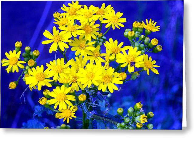 """flower Still Life Prints"" Greeting Cards - Yellow Wildflowers on Purple Greeting Card by B L Hickman"