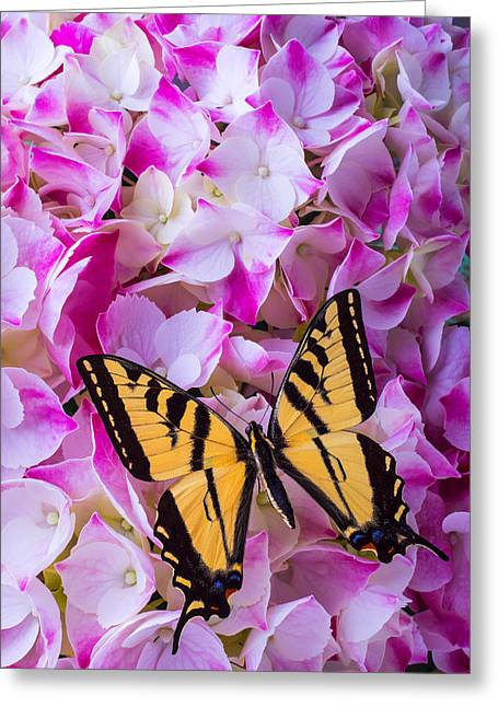 Yellow Butterfly Greeting Cards - Yellow Wings Greeting Card by Garry Gay